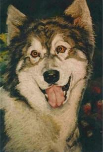 Husky Champion/pastel