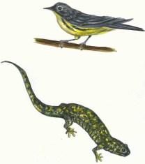 Bird/Lizard