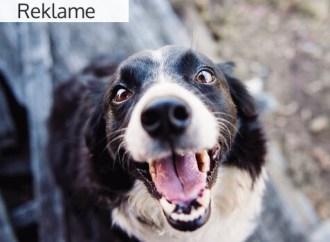 Få en glad og tilfreds hund med hjernegymnastik