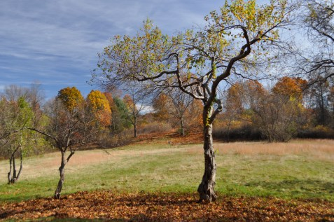 New Brook Farm Fall Landscape, 2014. Credit: Wilfred Holton