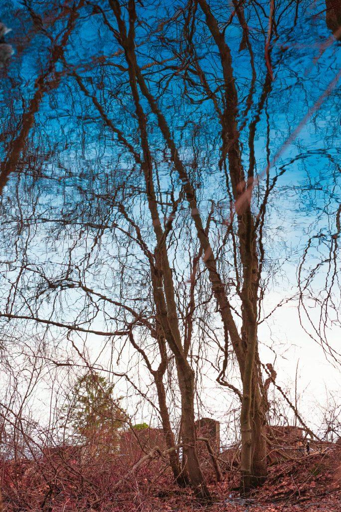 "Bruce Wilson ""Through the Trees"""