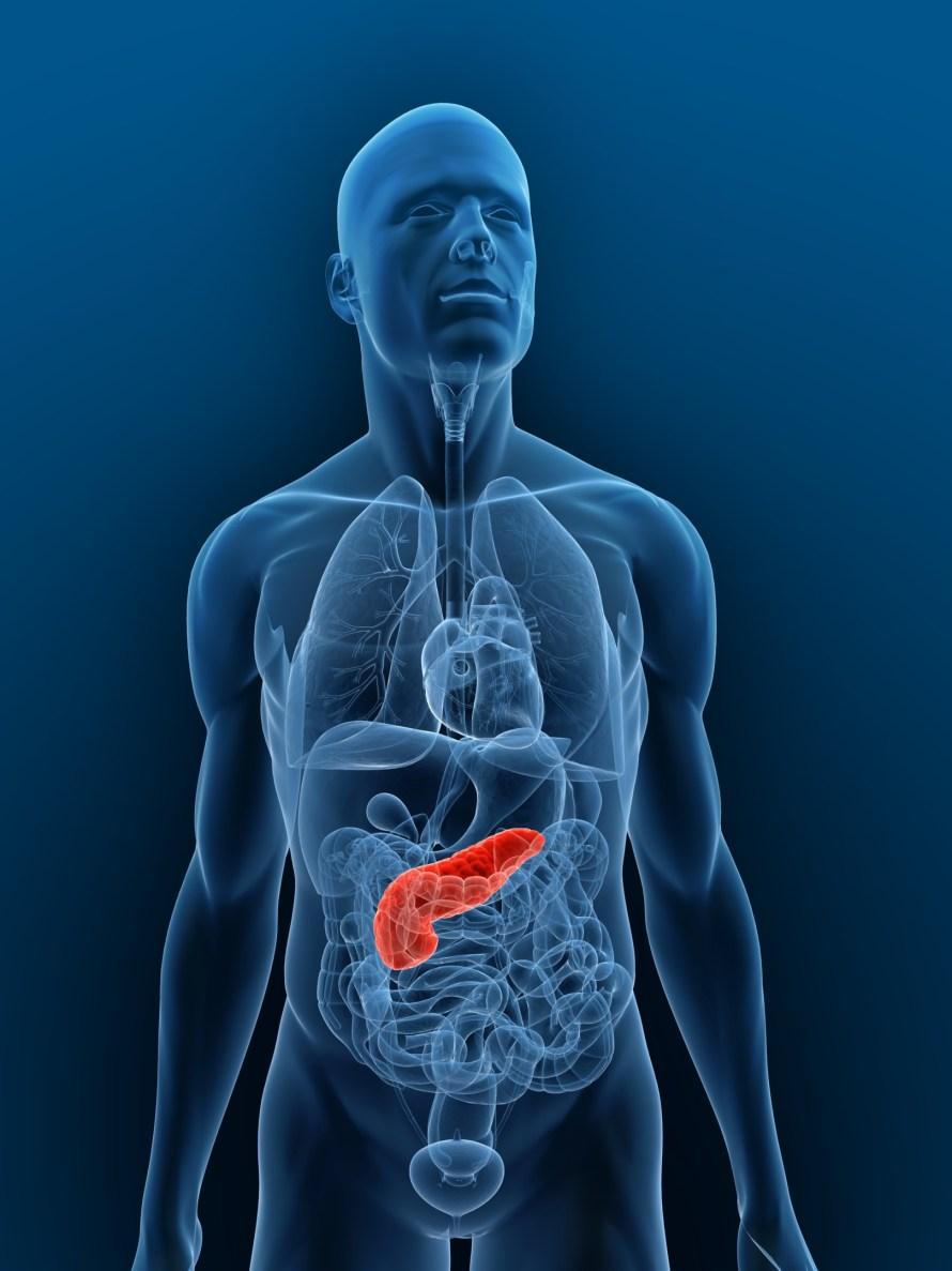 pancrease red illustration.jpg