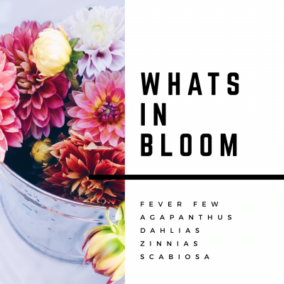 Whats In Bloom