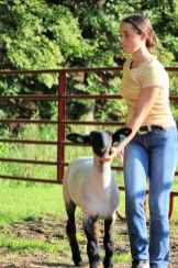 Randalyn Taylor was second place in her commercial ewe class and in her market lamb class. She was first-place in the intermediate sheep showmanship class.