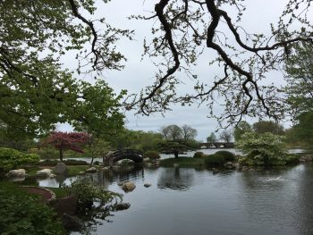 Summer 2019: Urban Odyssey, Communing in Chicago's Japanese Garden