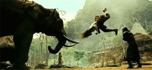 OB2_elephant_67