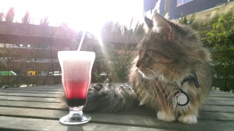 cocktail_and_cat3