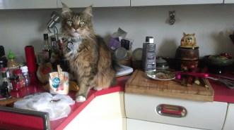 cat_helping_baking