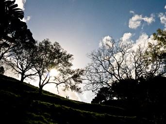 Spring time on Mount Eden