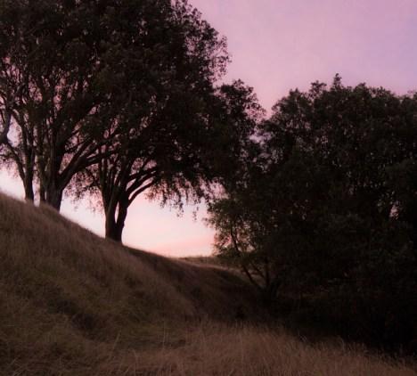 Twilight on Mount Eden
