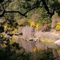 Fall Magic on the Rogue River