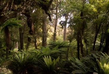 Rakiura - New Zealand