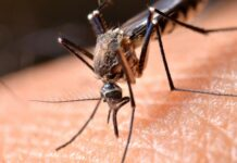 SPECIAL REPORT: Nigeria Misses 2020 Goals To Protect Pregnant Women From Malaria Courtesy Weak Health System
