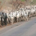 Quit Notice To Herders Tension In Oyo As Sunday Igboho Defies Gov. Makinde