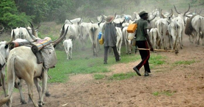 Quit Notice Our Herdsmen 'Ve Started Relocating To Kano - Miyetti Allah
