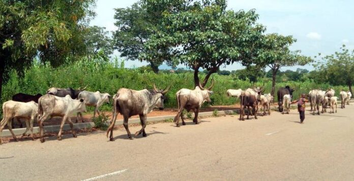 Bayelsa Assembly Okays Bill To Outlaw Open Grazing