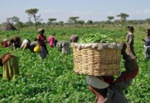 According to him, some of the various initiatives embarked upon to boost agricultural trade in Nigeria