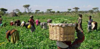 Ex-Gov. Condemns Killing of Farmers In Ekiti