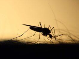 FG To Eliminate Malaria Prevalence – NEMP