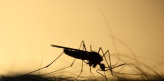 Malaria: Angola Registers over 5,500 Deaths In 5 Months
