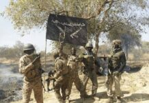 Troops Eliminate Scores of Terrorists In Borno