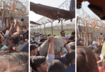 Disturbing Photos: Afghan Moms Throw Babies Over Barbed Wire At Airport To Escape Taliban
