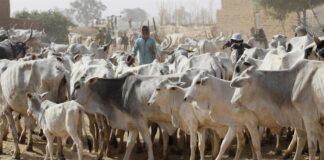 Anti-Grazing Law: Southern Governors Dare Miyetti Allah