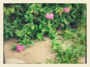 Beauty on the Ground. (c) 2016, JSB*Art. All Rights Reserved.