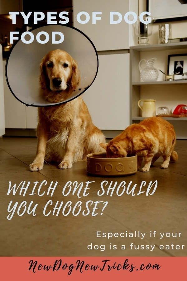 Types of Dog Food - Which One should You Choose_ P2