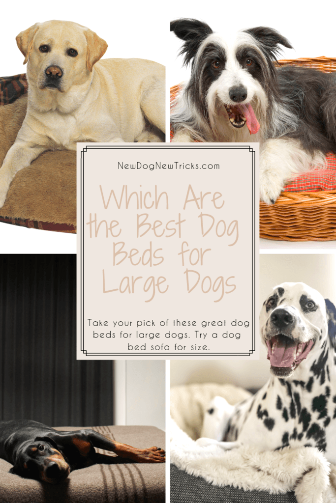 Dog Beds for Large Dogs – Which Are the Best Dog Beds Pin