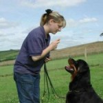 Dog Obedience Training at Home or  Doggy School: Which is best?