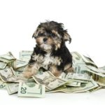 The Cost of Owning a Dog; Can You Afford It?