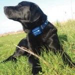 Shock Collars For Dogs, Everything You Need To Know About Them