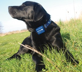 shock collars for dogs