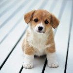 Do Your Truly Want That Puppy? Be Prepared for What They Don't Tell You!