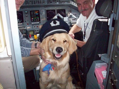 flying with dog