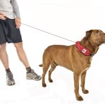 The Retractable Leash Debate: Pros, Cons and Truth