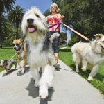 Benefits of Group Dog Walking