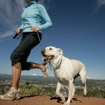 4 Ways to Exercise High-Energy Dogs While Keeping You Active