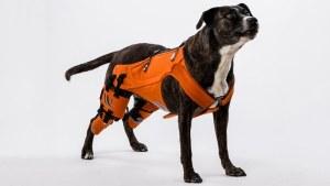 hip-dysplasia-dogs