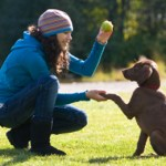 Using Positive Reinforcement For Dog Training
