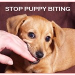 Puppy Biting: What Can I Do?