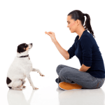 Which Dog Trainer Should I Choose?
