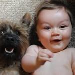 I'm Pregnant… How Do I Tell My Dog?