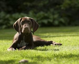 puppy-1624446_960_720-1
