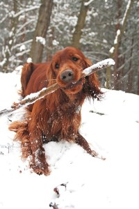 are sticks safe for dogs
