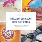 Brilliant Dog Hacks for Every Owner