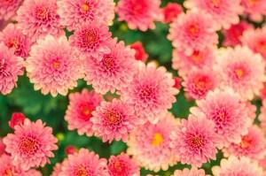 Ethereal Flowers Reiki