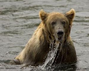 Bear Empowerment Reiki