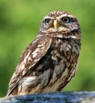 owl empowerment reiki